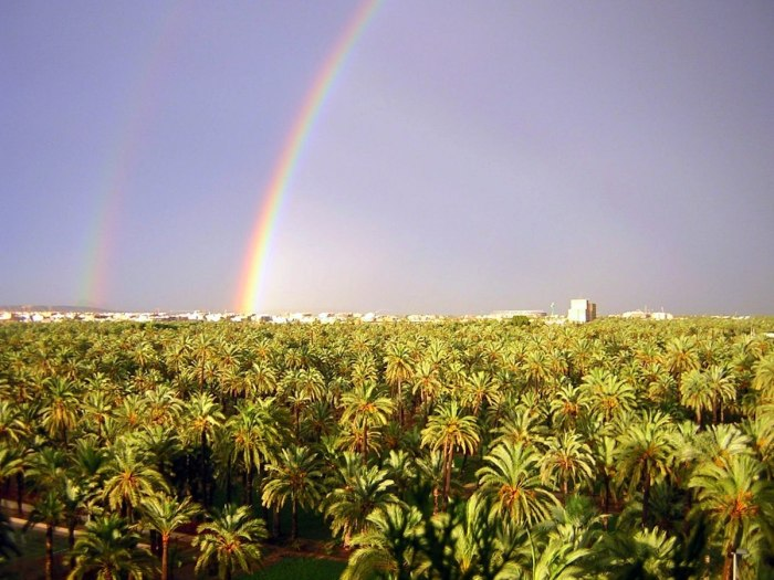 Palm Groves of Elche photo by Jose Carlos Diez via Wikipedia CC