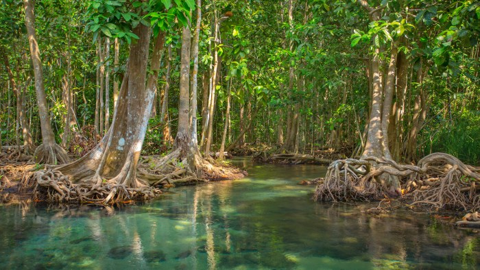 Mangrove Forest Thailand photo via Depositphotos