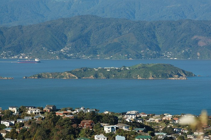 Matiu/Somes Island as seen from Mount Kaukau by Hamedog via Wikipedia CC