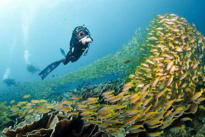 Scuba diving at South Miniloc