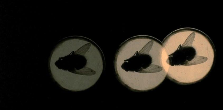 4-mosche-di-velluto-grigio-1971-cov932-932x460.jpg