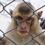 Hora de abolir os zoológicos!