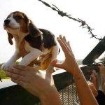 Libertar os animais, reumanizar a vida