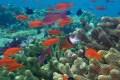 """Poluição, pesca industrial predatória e acidificação estão devastando vida marinha. Há saída: deixar de ver oceanos como """"terra de ninguém"""""""