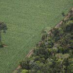 Em Santarém, panorama de uma Amazônia em transe
