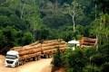 Como, num único ato, o governo abriu para o desmatamento, no oeste do Pará, o equivalente a 117 Fernandos de Noronha. Que outras áreas estão ameaçadas na Amazônia