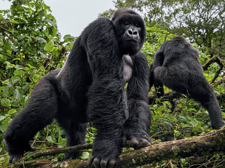 "Africa's Oldest National Park ""Virunga National Park"""