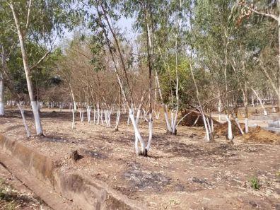 Forest Reserve Okpara Square Enugu (1)