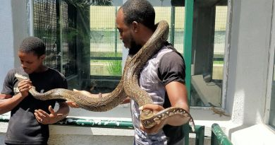 Things To Know About Tukur Tukur Snake Farm
