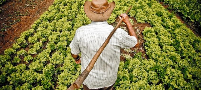 Os êxitos da agricultura familiar