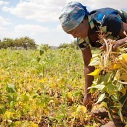 FAO elogia políticas brasileiras de combate à pobreza no campo