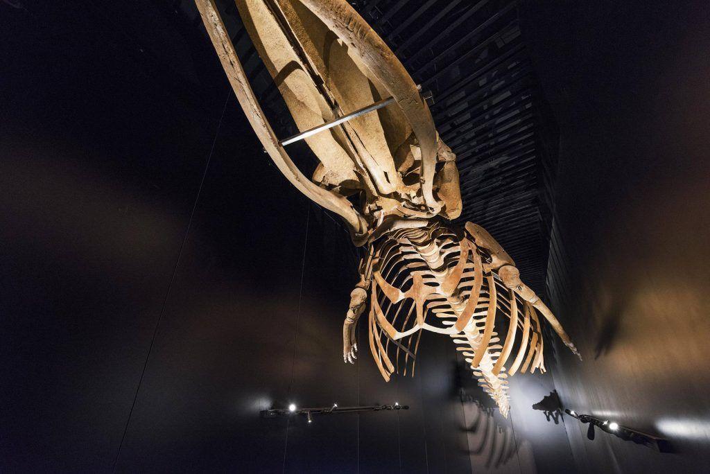 iluminación de museos