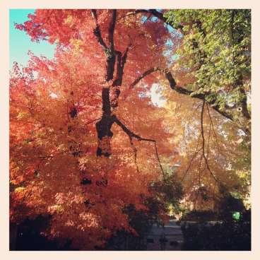 Autumn in Nevada City
