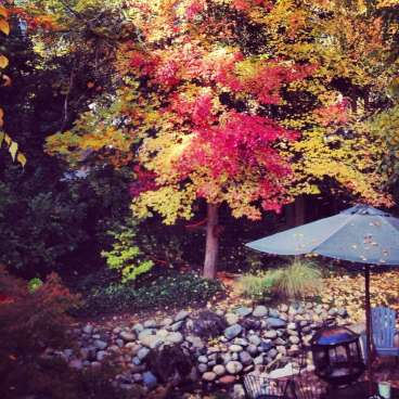 Fall color at the Outside Inn