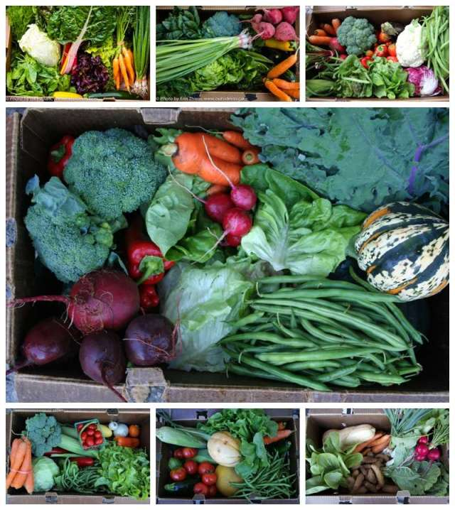 Nevada City Community Supported Agriculture Mountain Bounty Farm