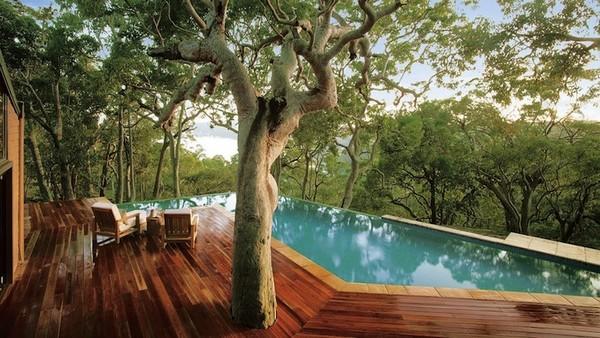 Tree by the Pool Source: HomeEdit