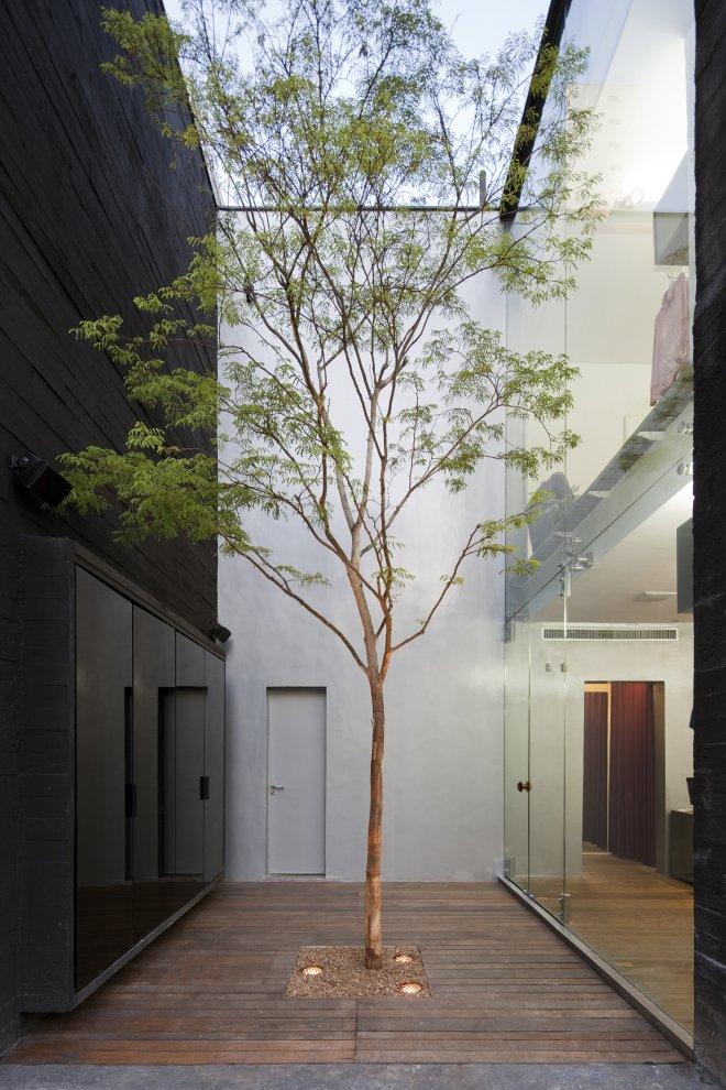 Tree in Narrow Internal Courtyard Source: Pinterest