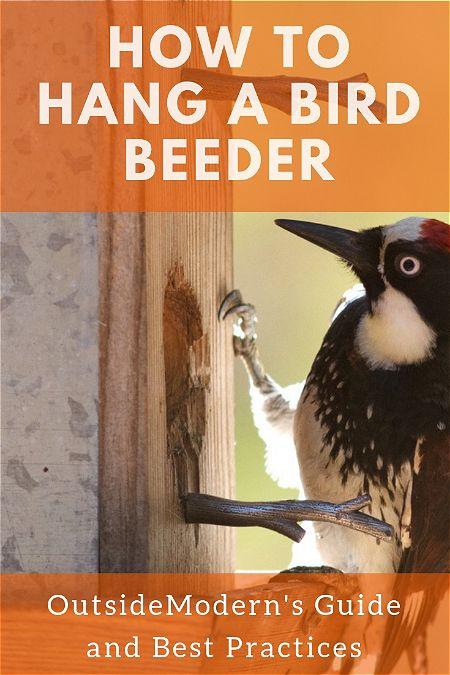 How to Hang a Bird Feeder