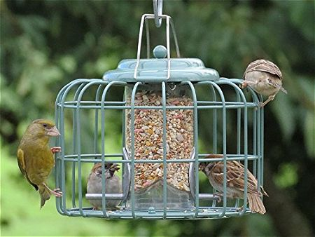 A Light Lunch at the Nuttery NT056 Seed Feeder