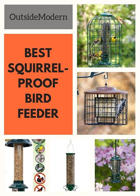 squirrel-proof bird feeder