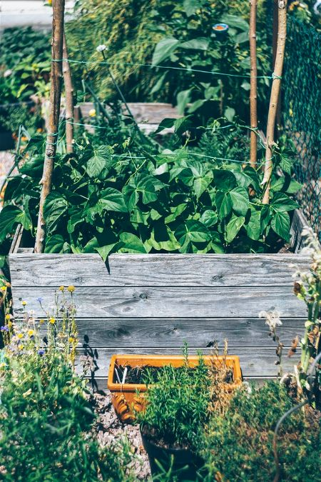 Garden Bed Photo