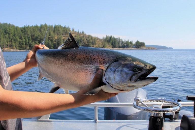 Man holds chinook salmon