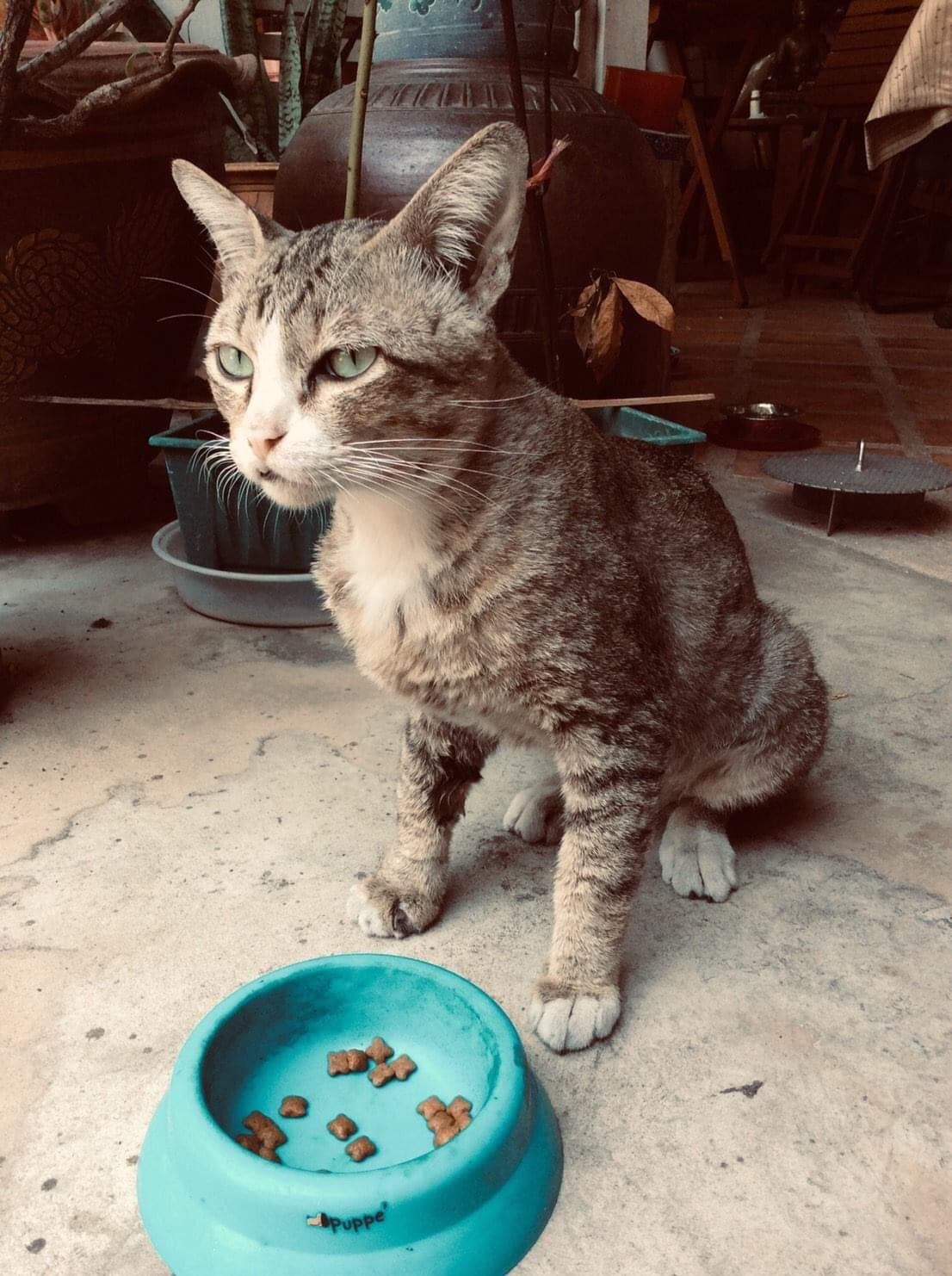 Bad mood elder cat during his lunch😾 (  เจ้าเหมียวแก่อารมณ์บูดตอนมื้อเที่ยง 😾)