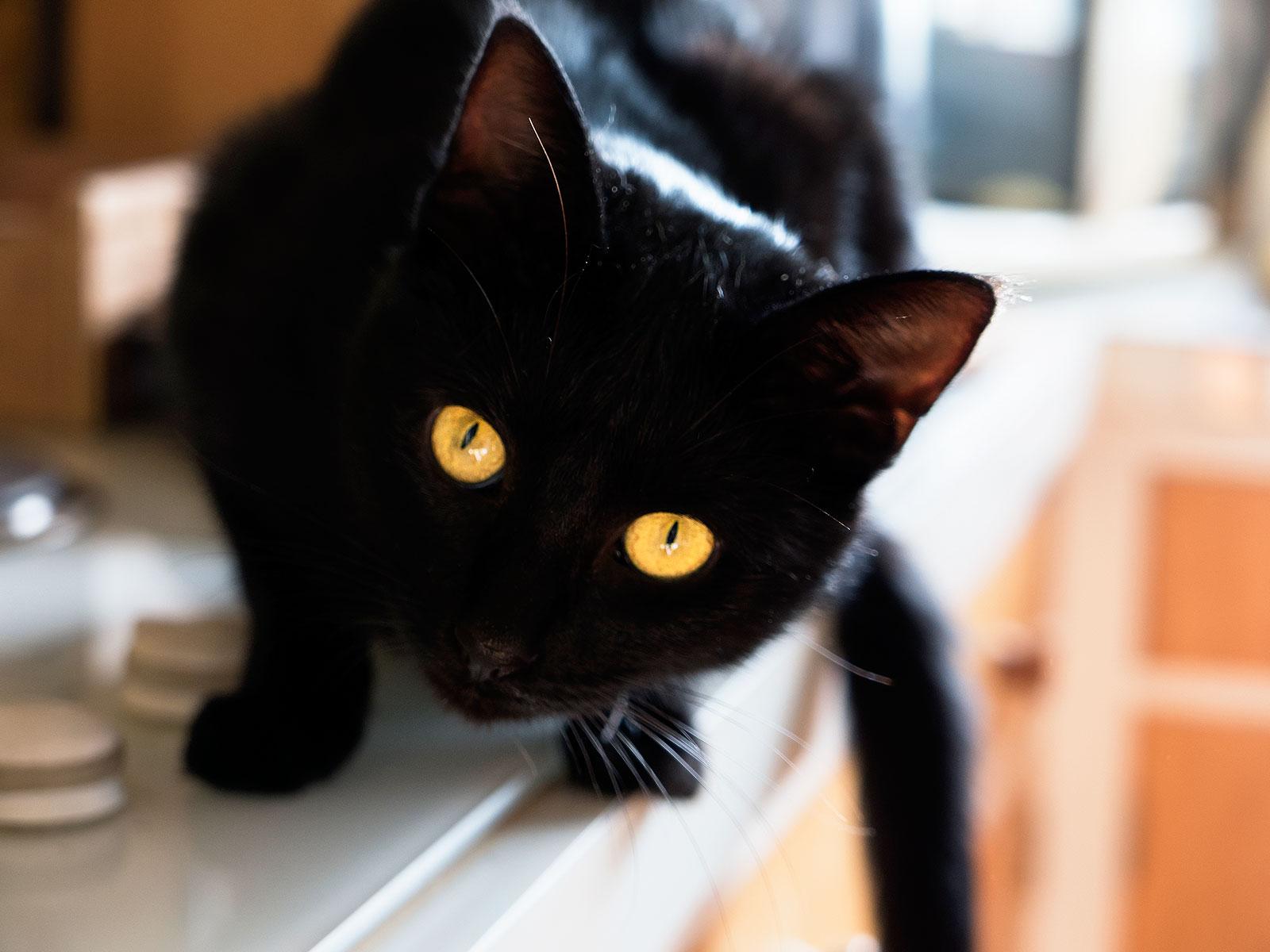 7 วิธีที่แมวดำจะนำโชคแก่ผู้คนทั่วโลก 🐱🐈😸⬛️