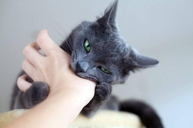 โดน แมวกัด และติดเชื้อจะรักษาอย่างไรดี ? 🤔🙀😬