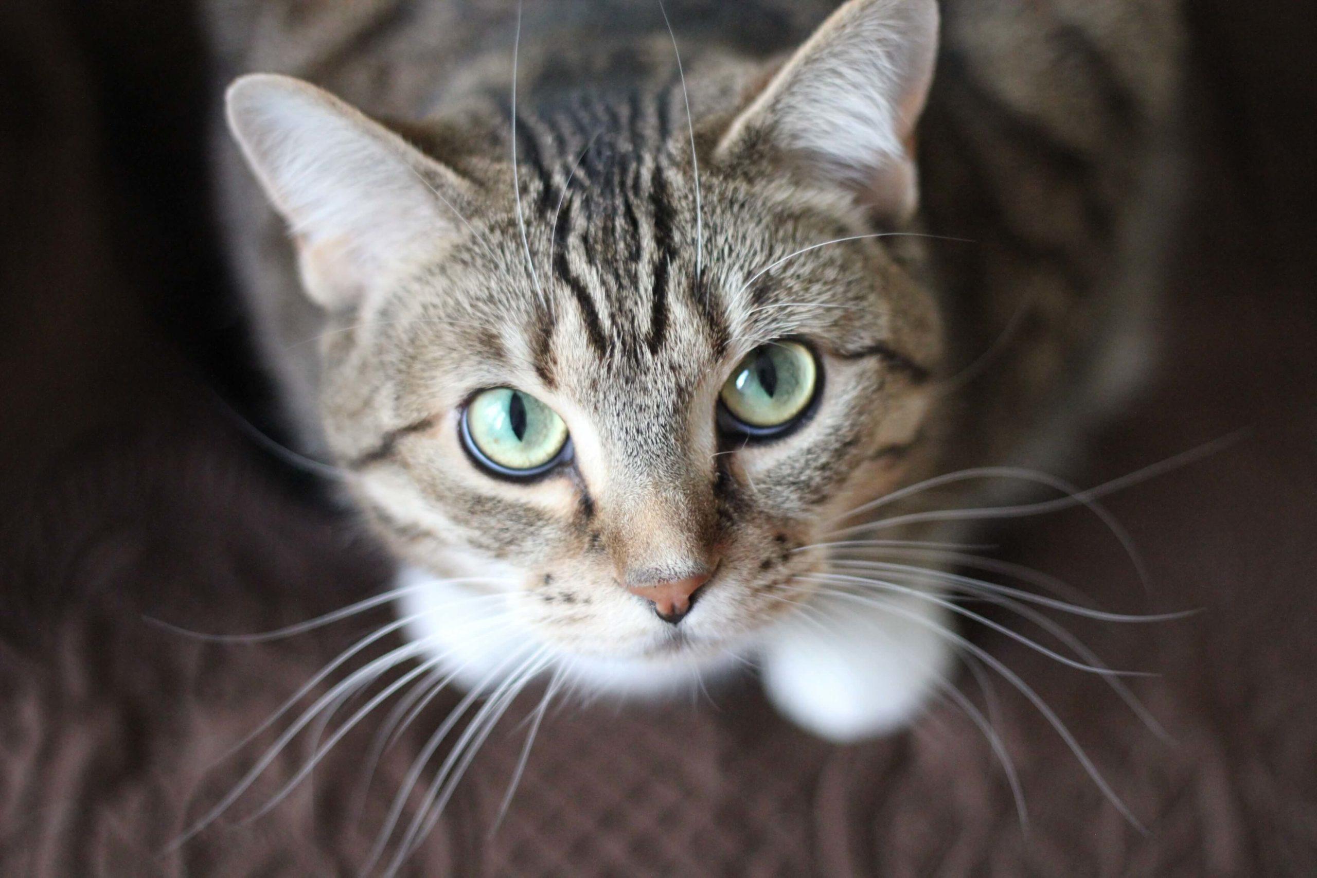 ประโยชน์ของการรับเลี้ยง แมวแก่ สูงวัย 🐱🐈👵🏻👴🏻