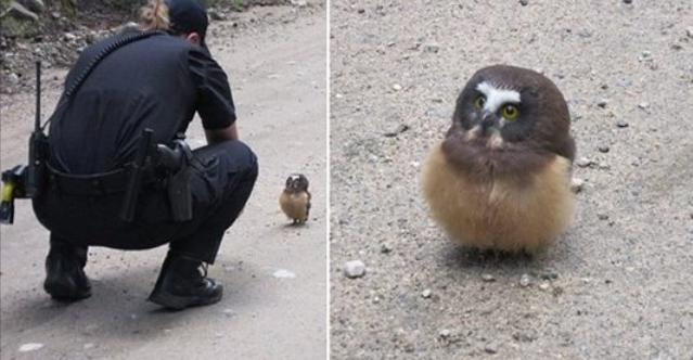 เมื่อ ลูกนกฮูก ตัวน้อยมาเจอตำรวจสาวใจดี เรื่องราวแสนน่ารักจึงบังเกิดขึ้น 👮🏻♀️🦉🐥❤️