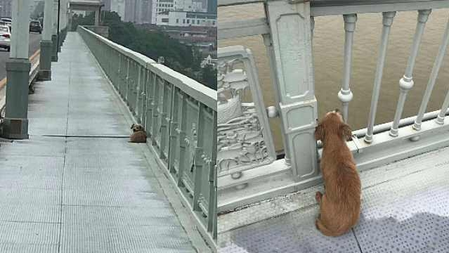 สุนัขแสนซื่อสัตย์ที่เฝ้ารอเจ้าของ 4 วัน อยู่บน สะพาน ที่เจ้าของกระโดดน้ำตาย 🐶🐕🧑🏻🦱😢🗼🇨🇳