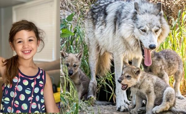 เด็กหญิง 6 ขวบผู้ใจบุญเรี่ยไร เงินบริจาค ได้ถึง 138,000 ดอลล่า ช่วยเหลือสวนสัตว์ที่กำลังจะปิด 👧🏻💵💰🤲🏻👌🏻🐶🐰🐻🐯🦁