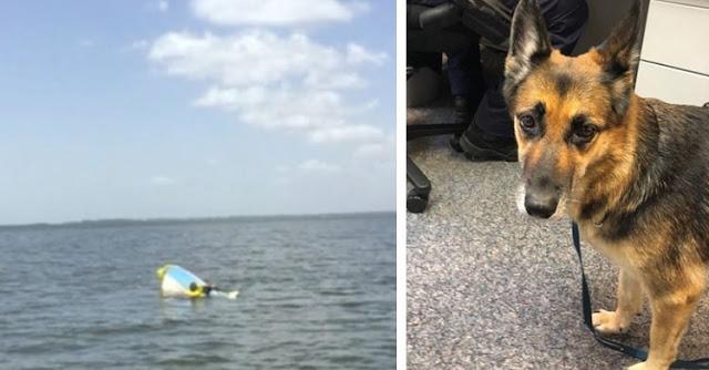 """สุนัขว่ายน้ำ 11 ชั่วโมงกลางทะเลเพื่อช่วยชีวิตเจ้าของหลังจาก """" เรือล่ม """" 🐶🐕🛶🚤🌊🤝🤲🏻"""