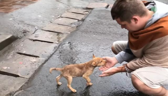 """ลูกสุนัขกำพร้า """" กระดิกหาง """" ขอให้ผู้คนที่เดินผ่านช่วยรับเลี้ยงด้วย 🐶🥺🙏🏻🤲🏻♥️🇱🇰"""