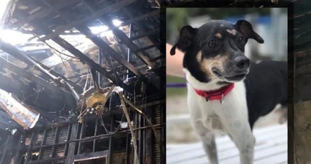 """สุนัขฮีโร่ผู้ """" สละชีวิต """" เพื่อช่วยเจ้าของและทั้งครอบครัวจาก """" ไฟไหม้ """" บ้าน 🐶🐕🤲🏻👨🏿🦱👴🏿👦🏿👧🏿🏡🔥☠️😢"""