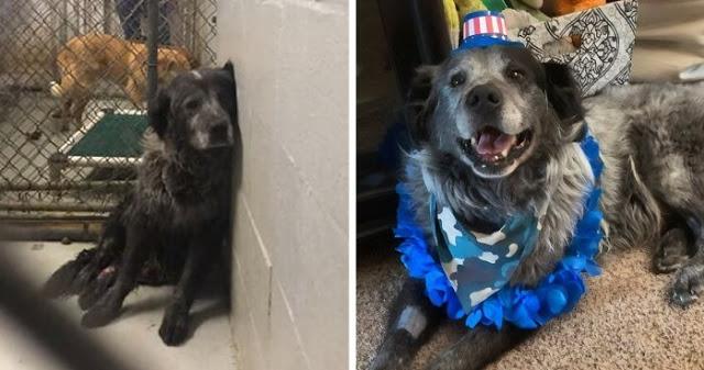 """สุนัขที่บาดเจ็บสาหัสไร้การเหลียวแลในศูนย์พักพิงเหมือนได้ """" ชีวิตใหม่ """" เมื่อได้รับความช่วยเหลือและได้รับเลี้ยง 🐶🐕🤕🤝🤲🏻♥️🏡"""