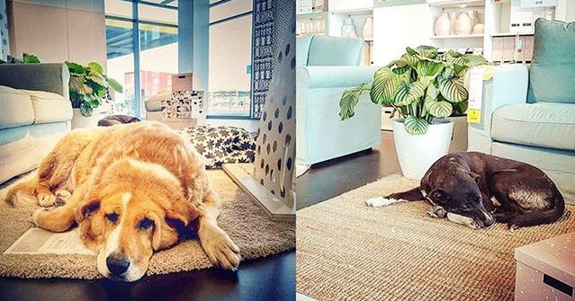 IKEA เปิดประตูให้ที่พักพิงหลบหนาวแก่เหล่าสุนัขเร่ร่อนไร้บ้าน 🐶🐕🤲🏻🌨❄️🏡🇮🇹