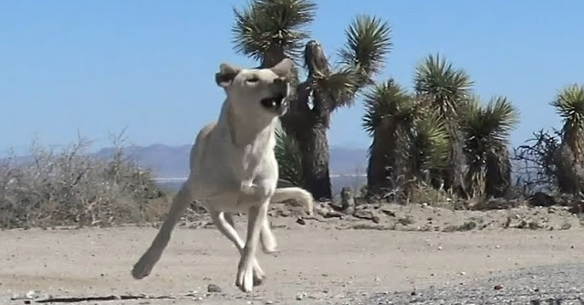 """สุนัขถูกทิ้งและเร่ร่อนใน """" ทะเลทราย """" จนกระทั่งมีคนมาช่วย 🐶🐕🏜🥵🤝🤲🏻❤️🇺🇸"""