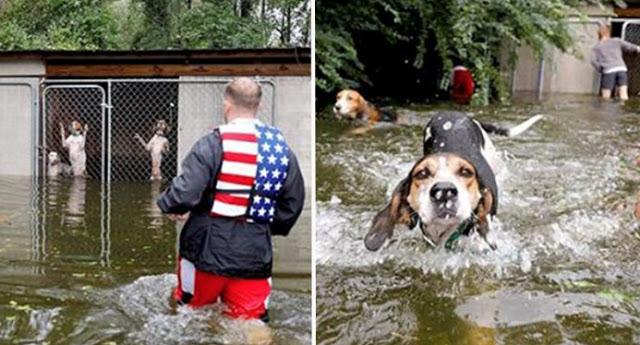 """ฮีโร่อาสาสมัครช่วยเหลือสุนัข 6 ตัวที่ถูกทิ้งในกรงที่ """" น้ำท่วม """" สูงได้อย่างหวุดหวิด 🐶🐕🌪🌊🤝🤲🏻👌🏻♥️🇺🇸"""