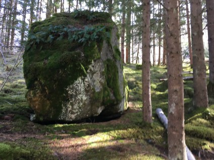 moss forests of norway