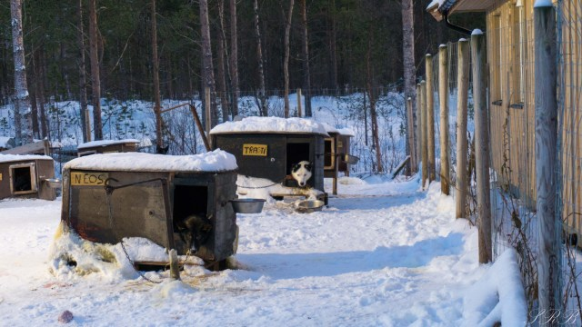 Trasti & Trine, dog sledding in Norway Outside This Small Town, Alaskan huskies