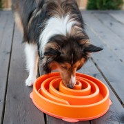 best dog food for dogs with sensitive stomachs