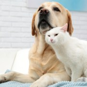 a dog and a cat. pet microchip cost