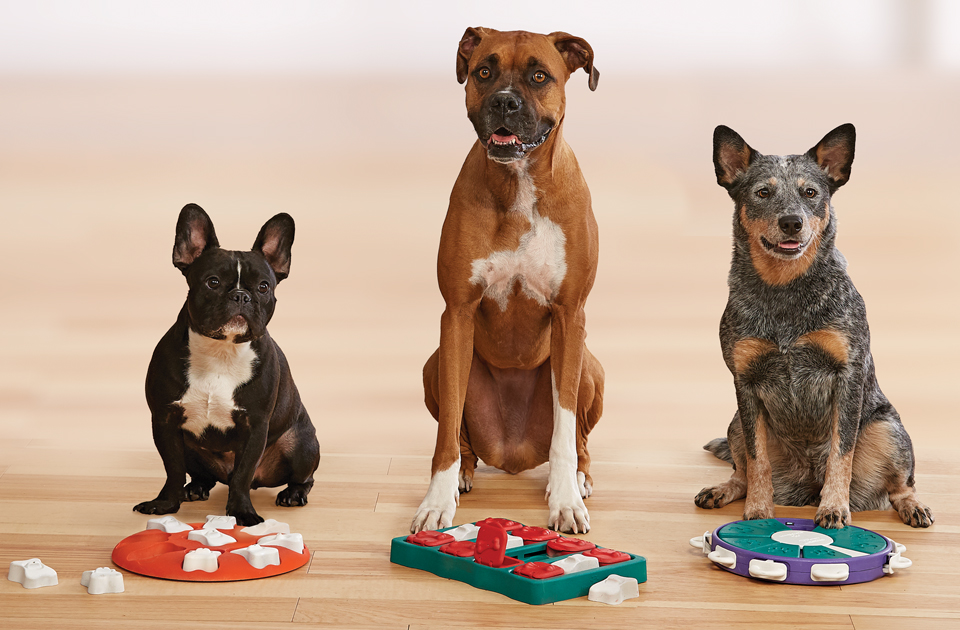 Three dogs sitting in front of Outward Hound Dog Puzzles mental stimulation for dogs