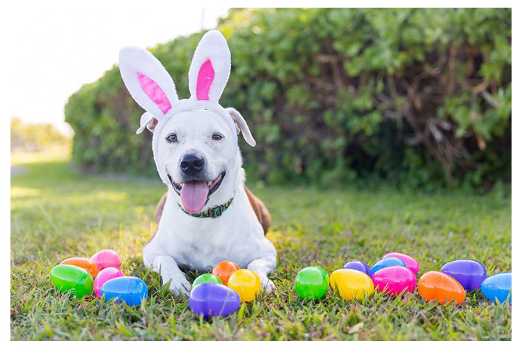 easter dogs