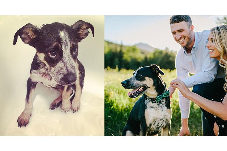 amazing dog rescue stories