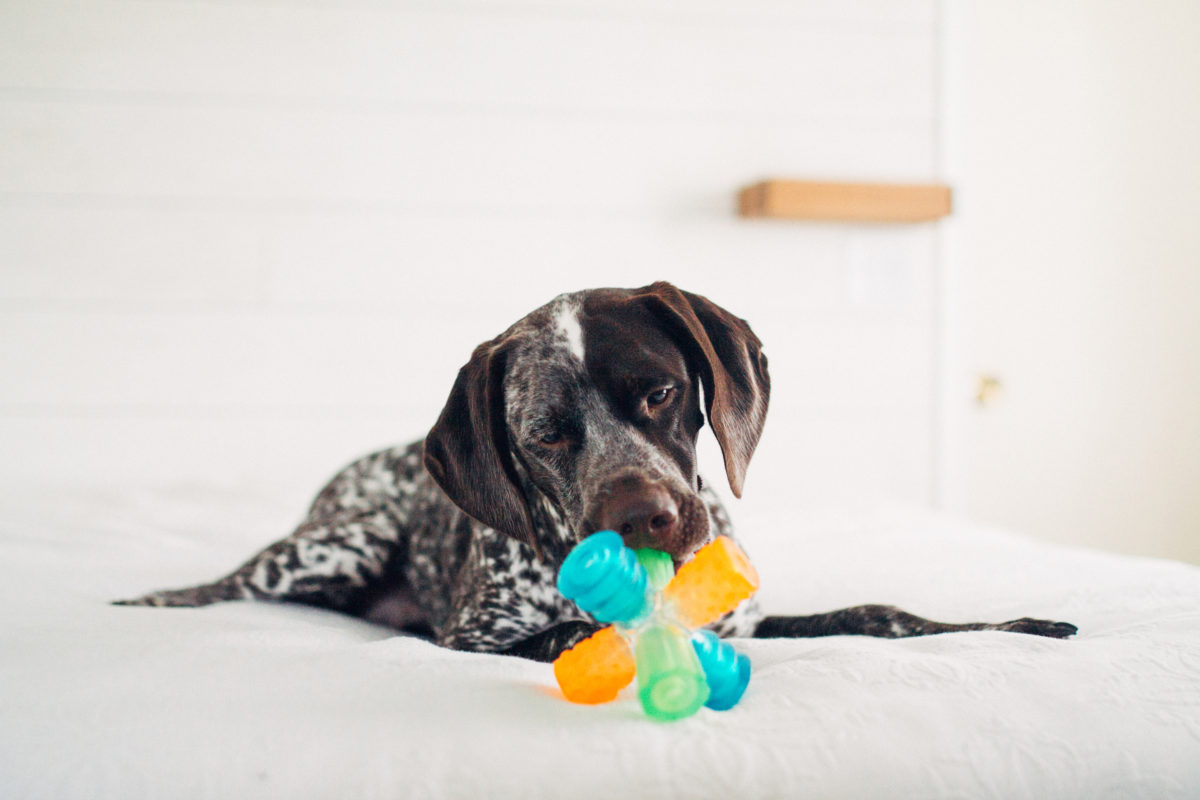 dog with triple jack toy