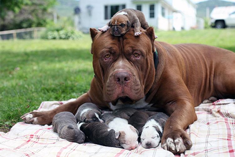 proud dog moms