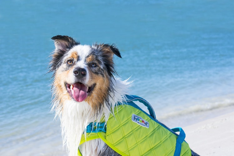 Dog at the beach wearing Outward Hound Standley Sport Experienced Swimmer Life Jacket for Dogs